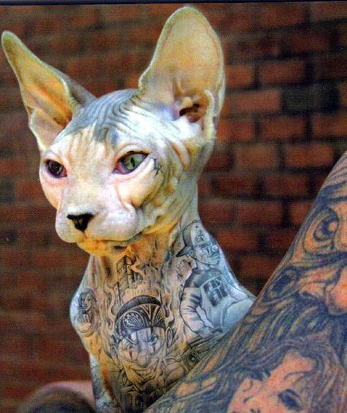 Tattoed cats