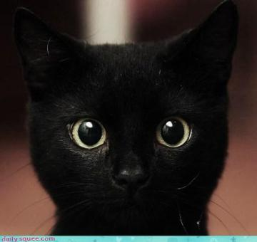 15 Black cats pictures… (and meet my cat)