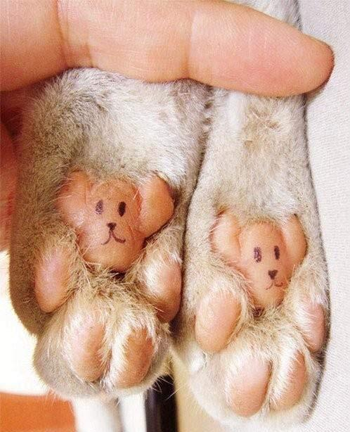 all cats have bear paws