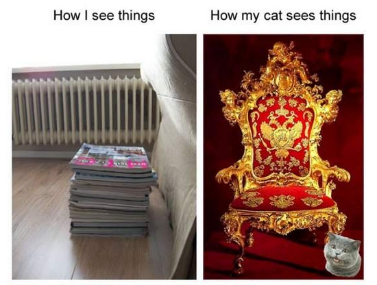 how i see things - how my cat seess things 1