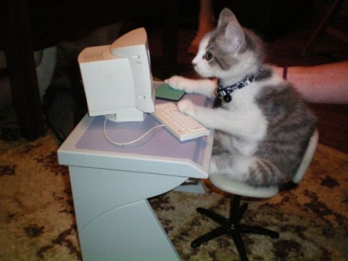 Cats love computers (20 great pictures)