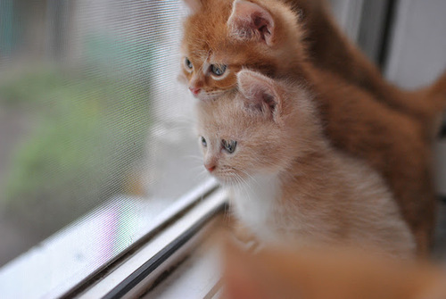 Cute kittens (20 great pictures) 12