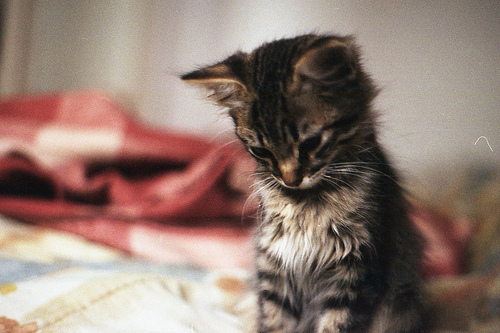 Cute kittens (20 great pictures) 16
