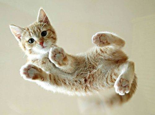 Cute kittens (20 great pictures) 17
