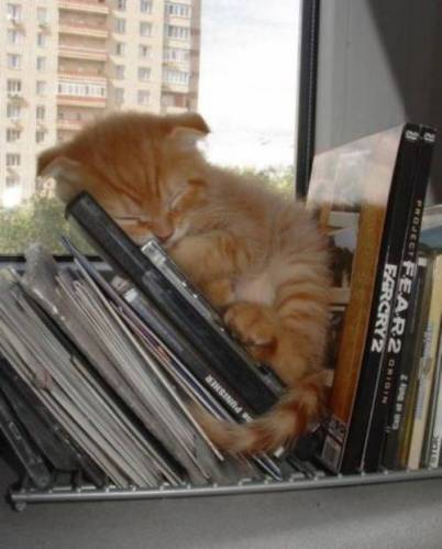 Cute kittens (20 great pictures) 19