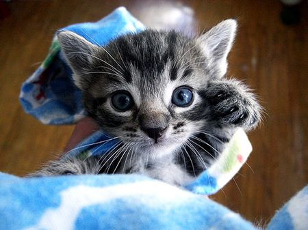 Cute kittens (20 great pictures) 3