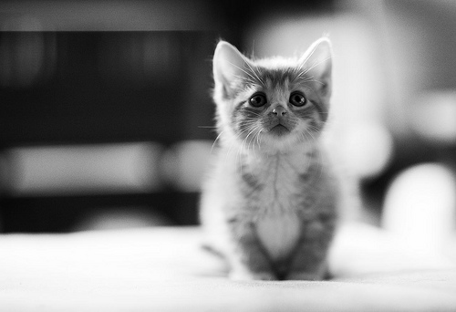 Cute kittens (20 great pictures) 4
