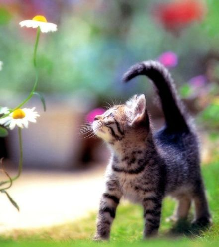 Cute kittens (20 great pictures) 6