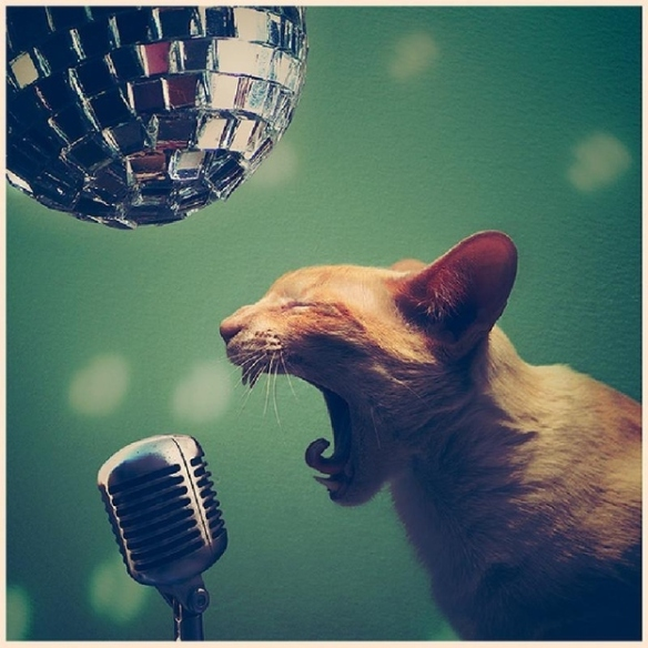 This cat is a college student by day, but sings at bars in the evenings