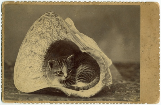 vintage cute kitty