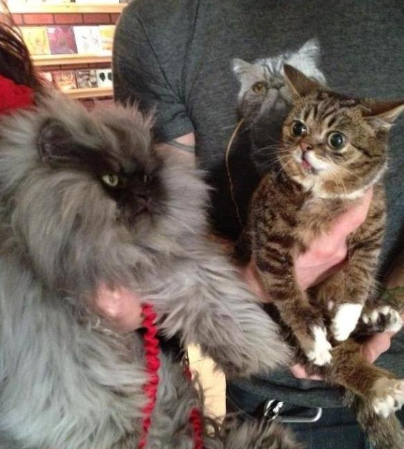 Lil Bub meets Colonel Meow