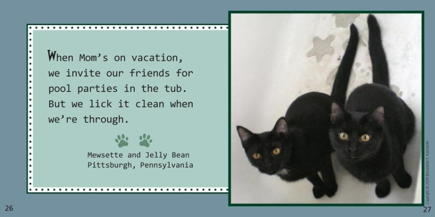 Cat Confessions A Kitty Come Clean