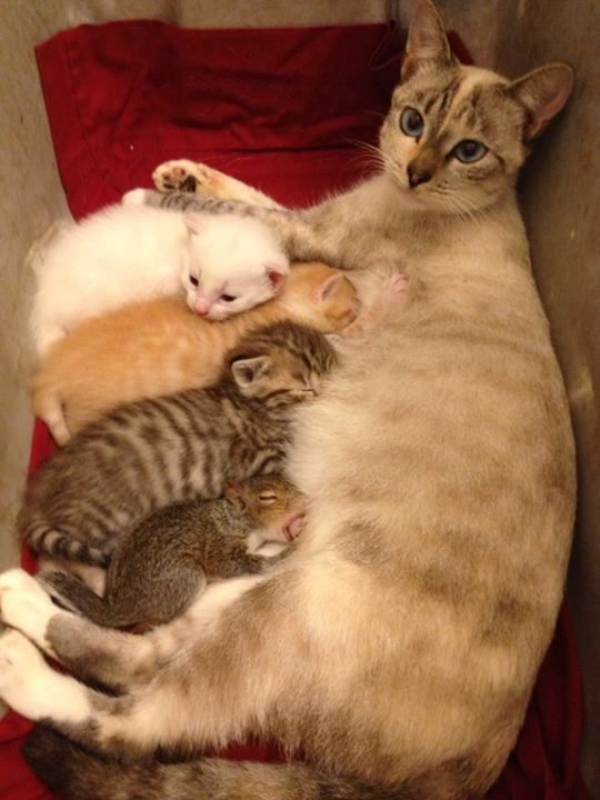 Mama cat, her kittens and a squirrel...