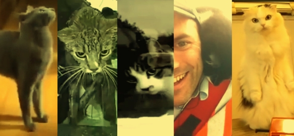 5 cat videos that will brighten your day